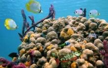 coral-reef-bleaching-13