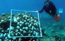 reef-bleaching
