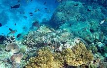 coral-reef-bleaching-4