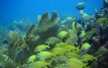 coral-reef-bleaching-8