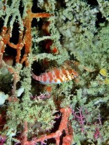 Barrier Reef Coral Bleaching