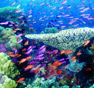 The Beauty of Coral Reef